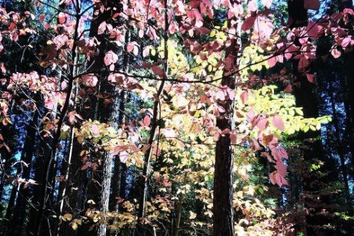 Fall in California: Autumn Colors in the Forest